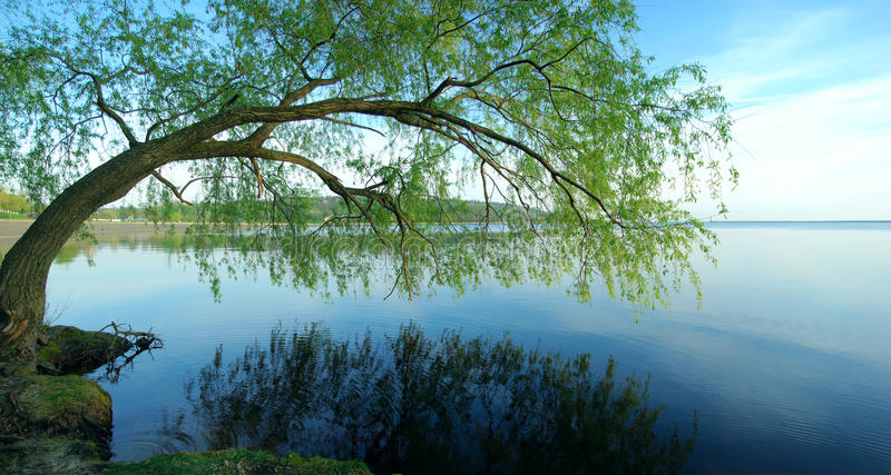 Summer landscape. Green trees reflected in the Dnieper river near the Kiev city stock images