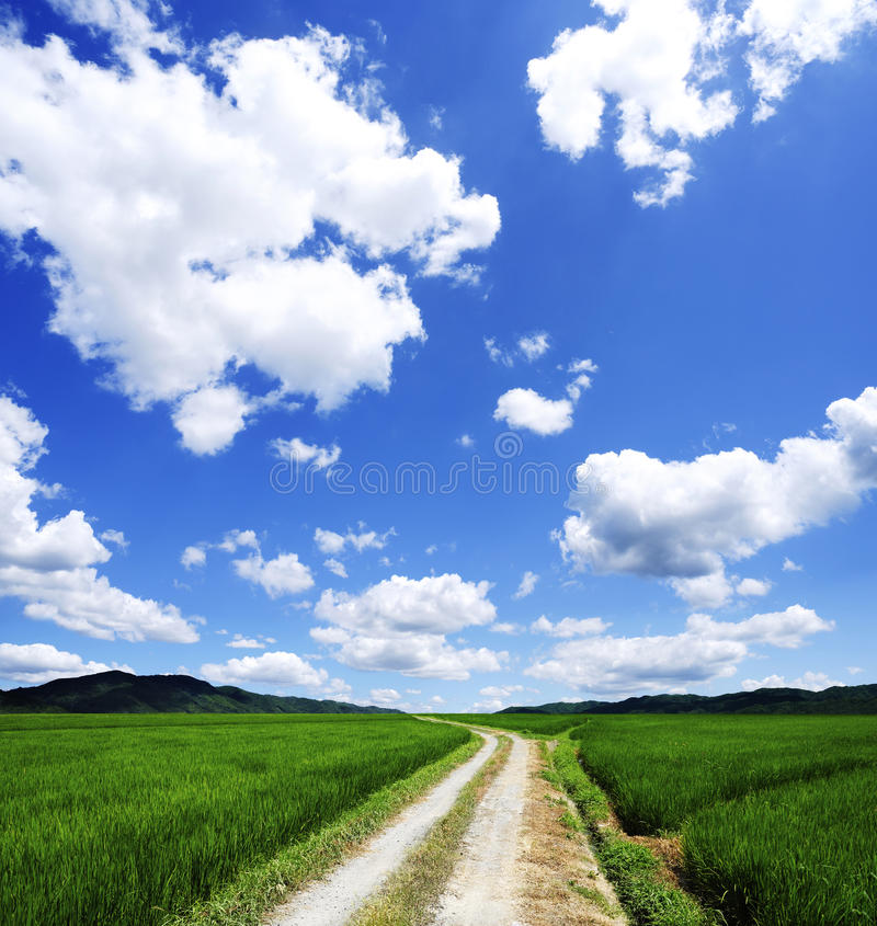 Summer landscape royalty free stock photo