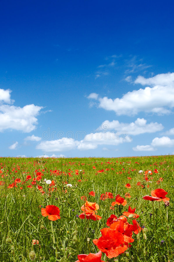 Summer Landscape. Beautiful landscape - with poppy flowers in foreground - great blue sky with fluffy clouds stock photography