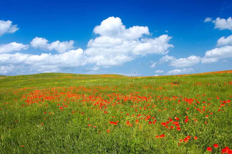 Summer Landscape. Beautiful landscape - with poppy flowers in foreground - great blue sky with fluffy clouds royalty free stock photography