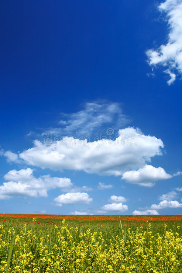 Summer Landscape. Beautiful landscape - with flowers in foreground - great blue sky with fluffy clouds stock photo