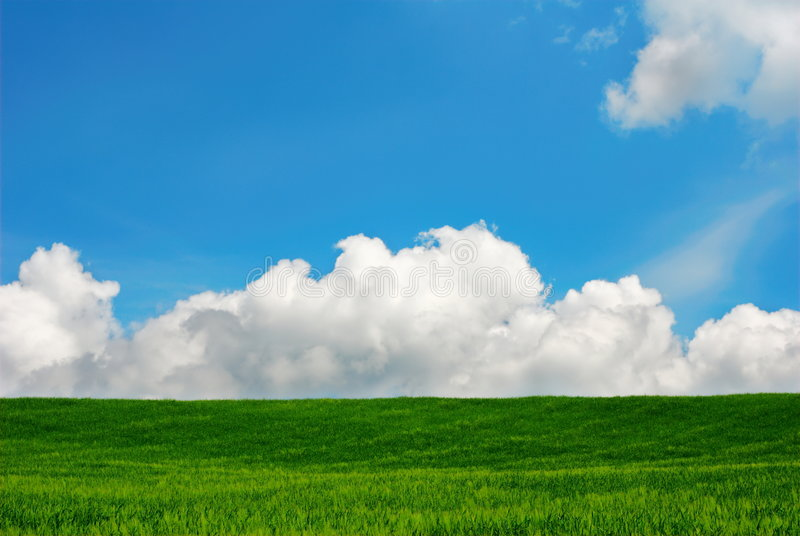 Summer landscape. Green field, blue sky and white clouds royalty free stock photos