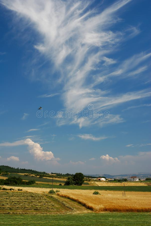 Summer Landscape Stock Photos