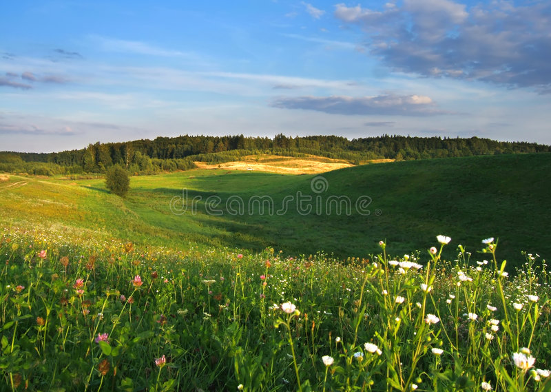 Summer landscape royalty free stock images