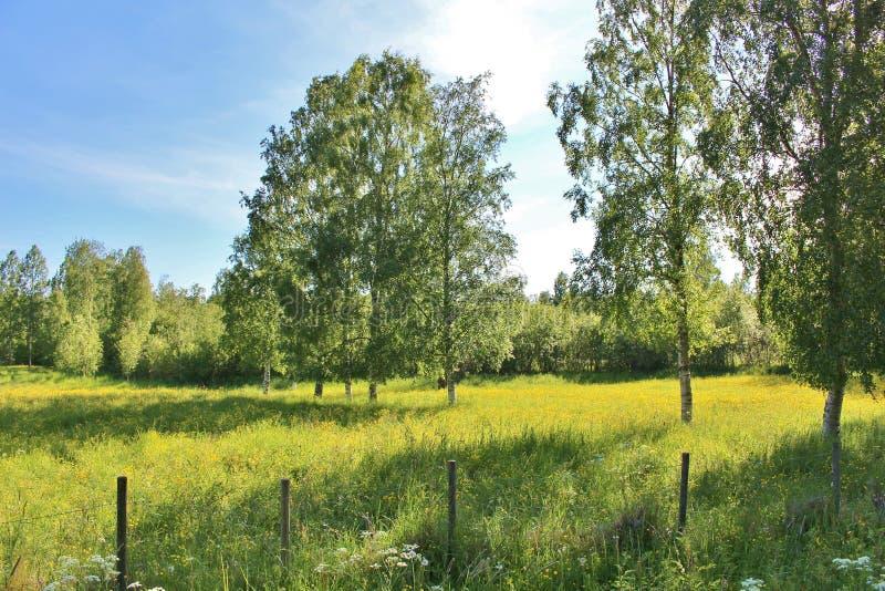 Summer landscape. A beautiful summer landscape on Herstö kullar in Lule royalty free stock photography