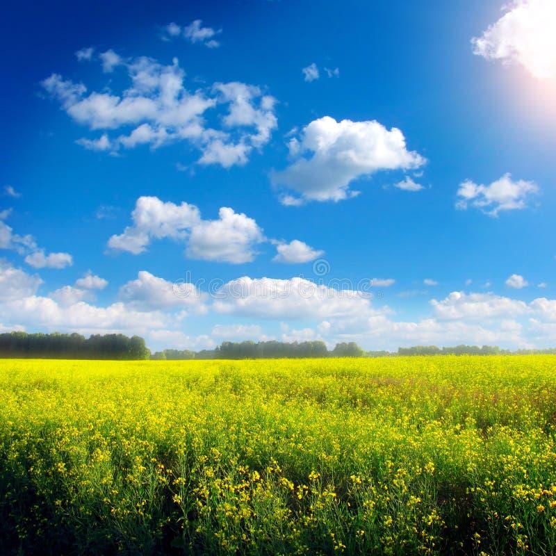 Download Summer Landscape Stock Photo - Image: 39802215