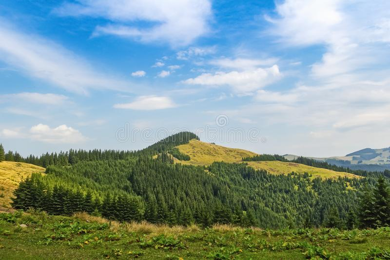 Summer landscape in the Carpathians. View of a mountain ridge covered in spruce forest royalty free stock image