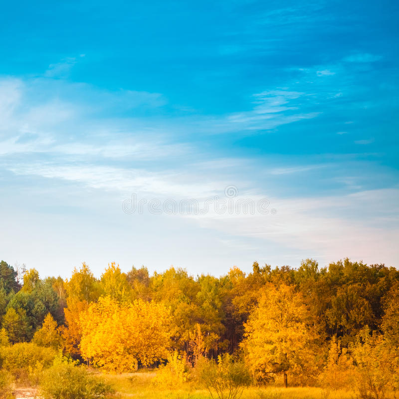 Summer Landscape With Colorful Forest stock photos