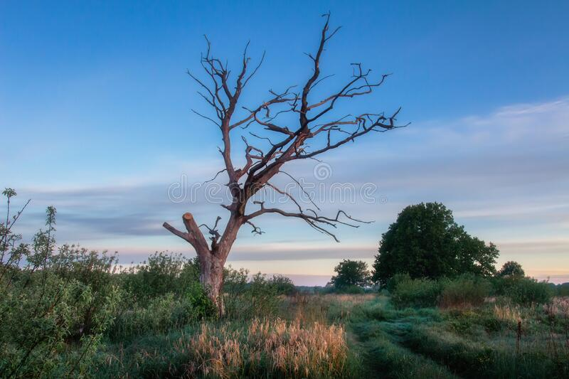 Summer landscape with old dry tree royalty free stock photo