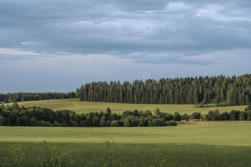 Summer landscape of Eurasia. Landscape depicting forest and meadows of Eurasia royalty free stock photo