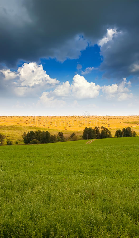 Summer landscape with field stock photo