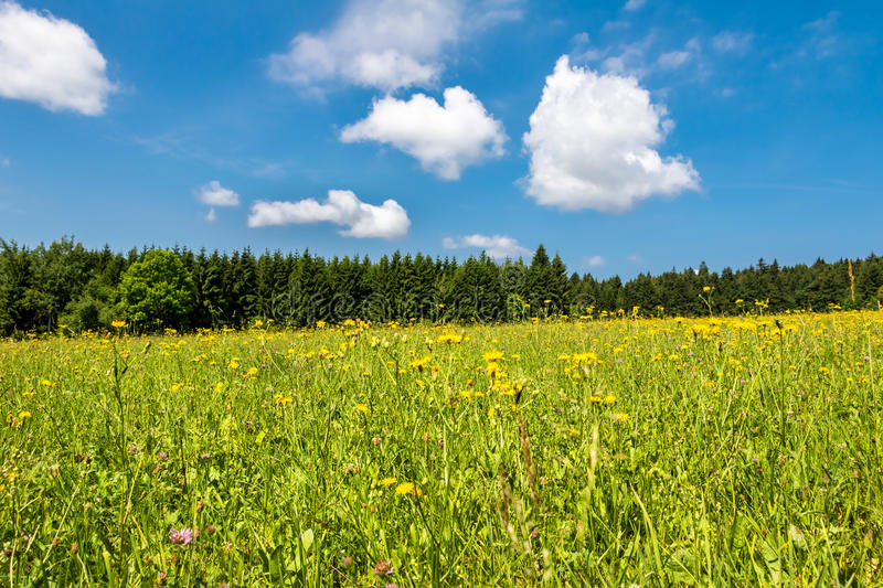 Summer landscape with flowering meadow. Forest and blue sky with clouds - Czech Republic, Europe royalty free stock photo