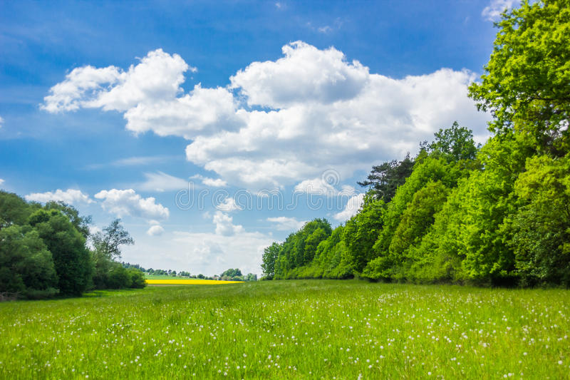 Summer landscape with forest and field. In Czech Republic stock photos