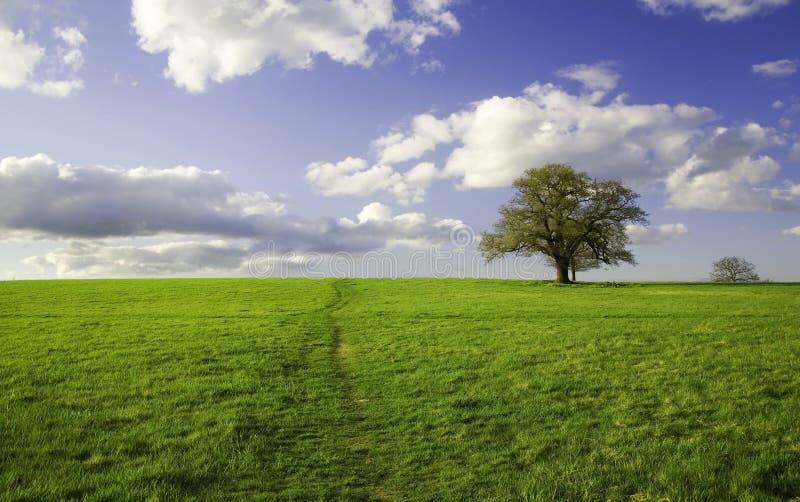 Summer landscape - green field royalty free stock photo
