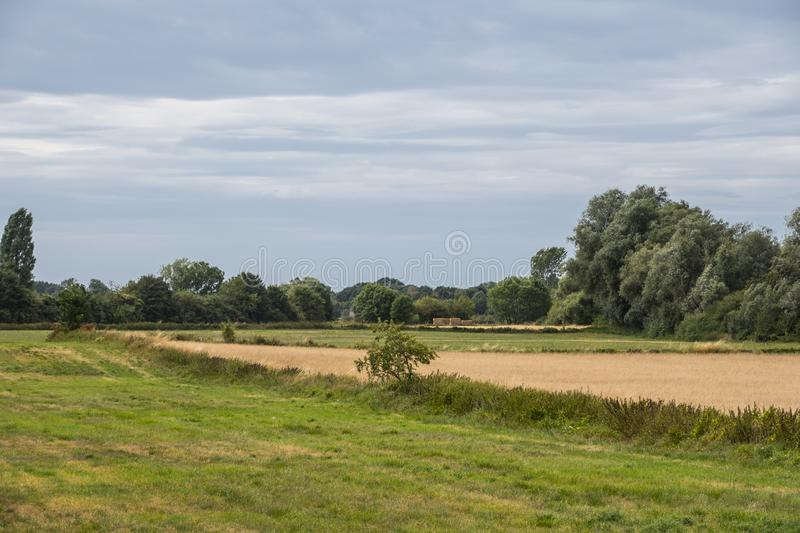 Summer landscape with green grass and cloudy blue sky royalty free stock photo