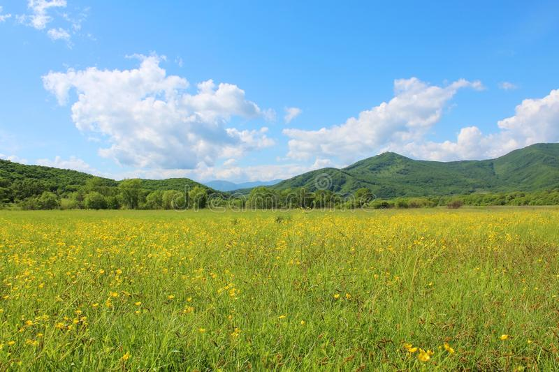 Summer landscape with green grass, hills and clouds. Sanny summer landscape with green grass, yellow meadow flowers, hills and clouds royalty free stock images