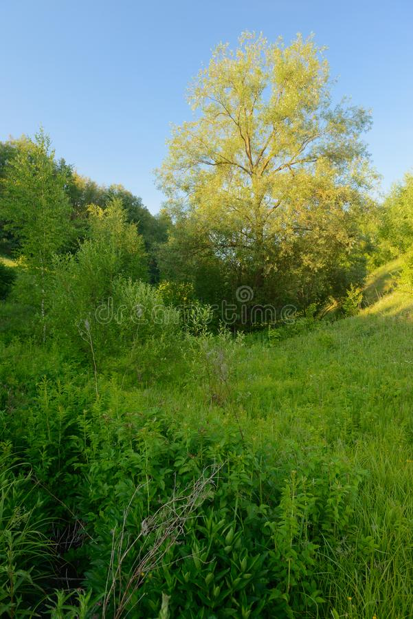 Summer landscape with green plants and trees in a ravine. Vertical summer landscape with green plants and trees in a ravine stock photos