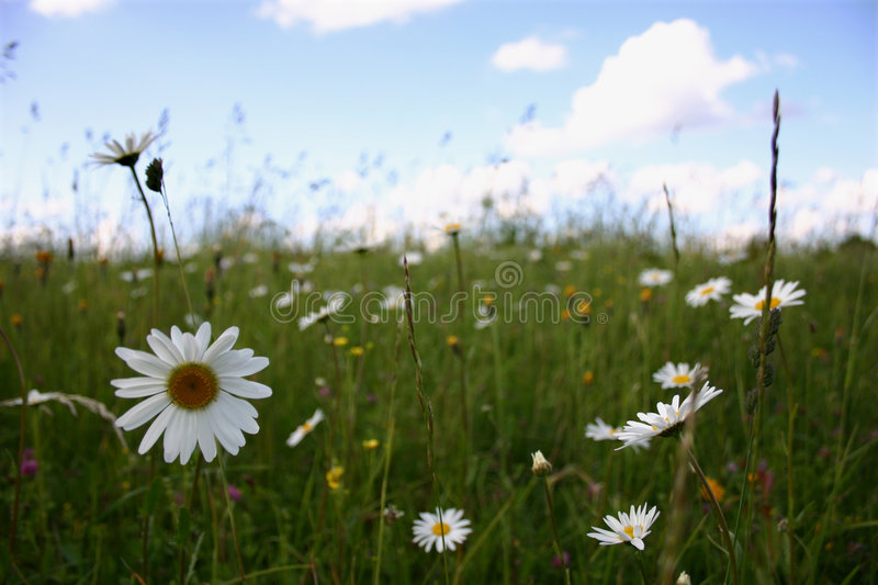 Summer landscape II royalty free stock photography