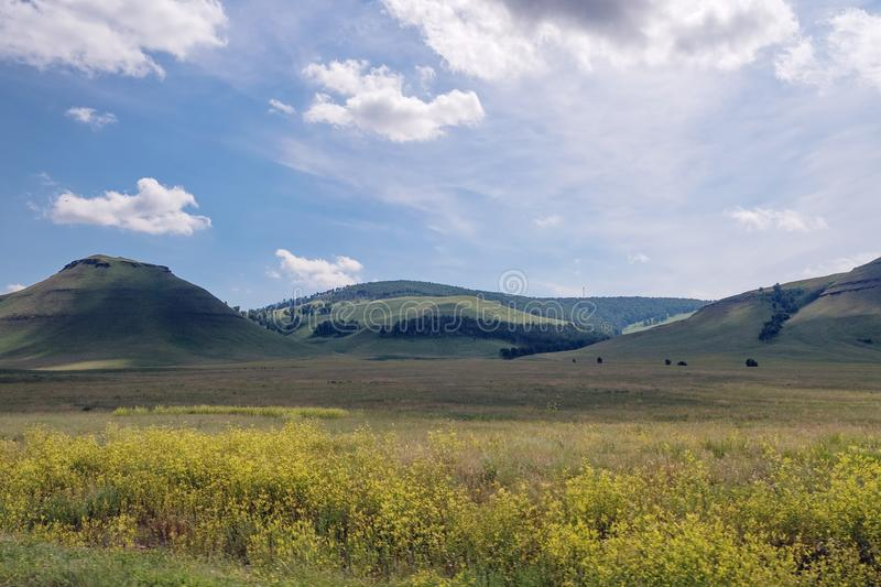 Khakass landscape with a blooming yellow flowers of a meadow on the background of wooded mountains. stock photos