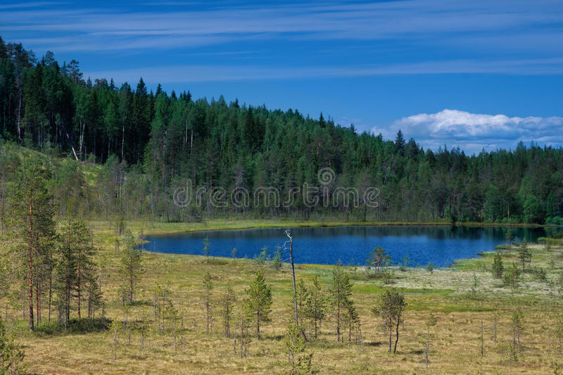 Download Summer Landscape With Lake Among Forest Royalty Free Stock Images - Image: 17859449