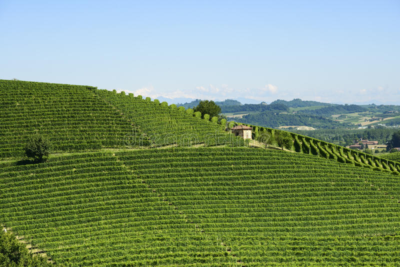 Download Summer Landscape In Langhe (Italy) Stock Image - Image: 43480265