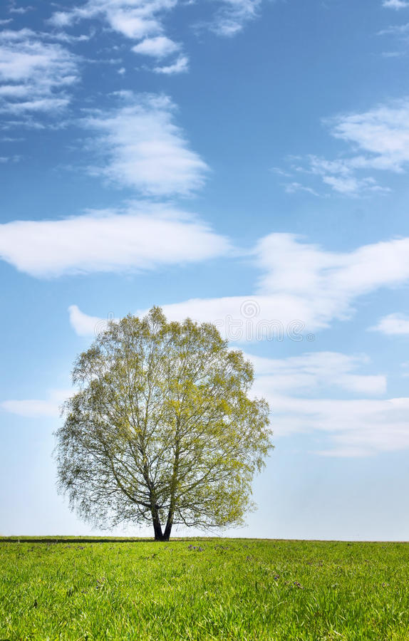 Download Summer Landscape With Lonely Tree Stock Photo - Image: 24896558