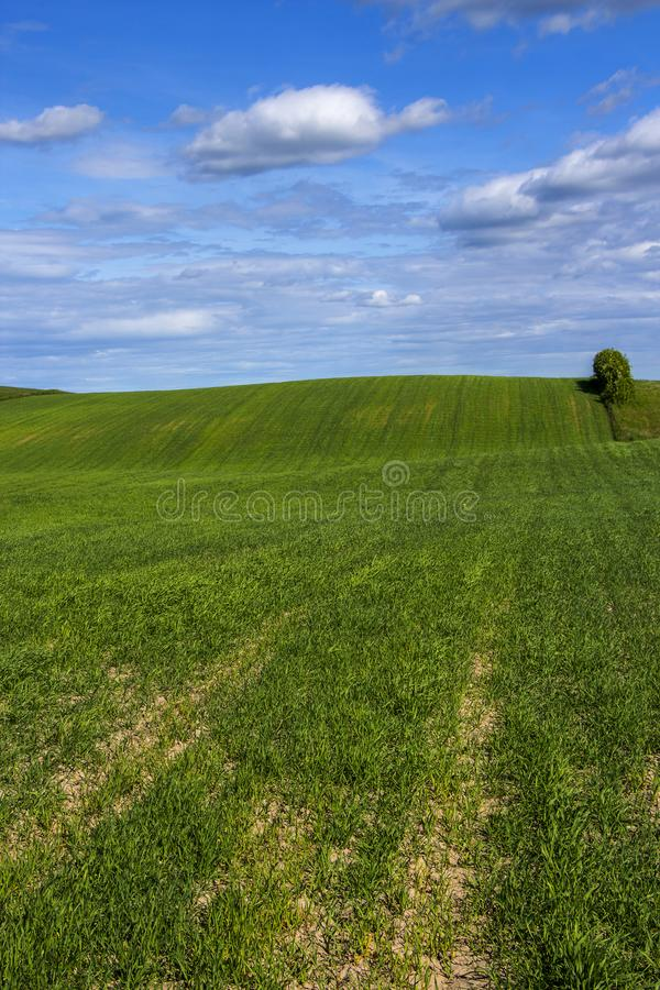 Summer landscape with a lonely tree background royalty free stock image