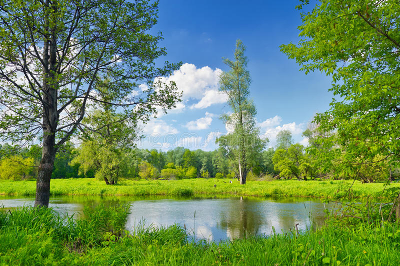 Summer landscape with lonely tree and blue sky stock photos