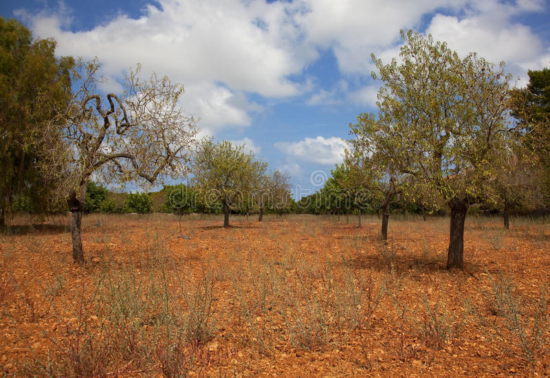 Summer Landscape Of Mallorca Stock Photography