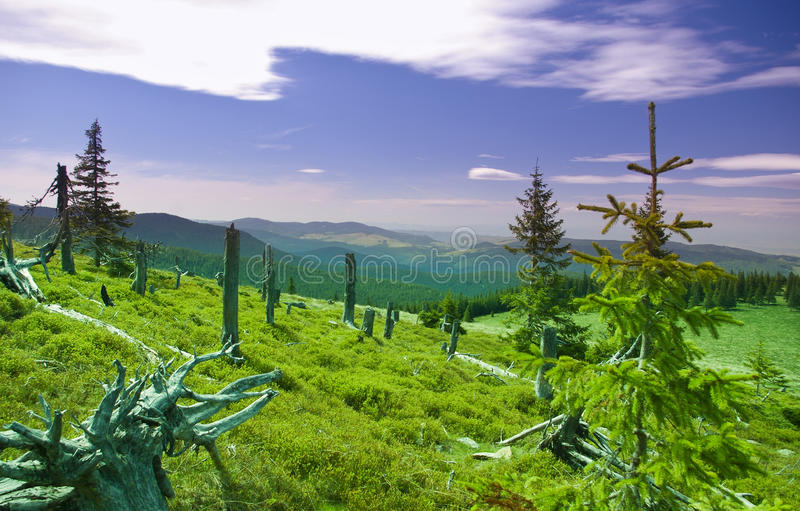 Summer landscape in mountain stock images