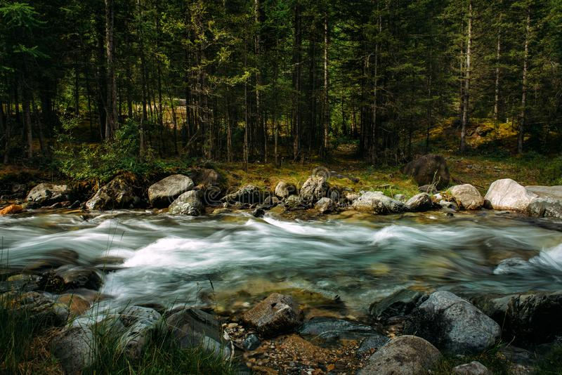 Summer landscape of mountain river among green trees. Sunlit river in the mountain forest. Picture of beautiful nature. Long exposure royalty free stock images