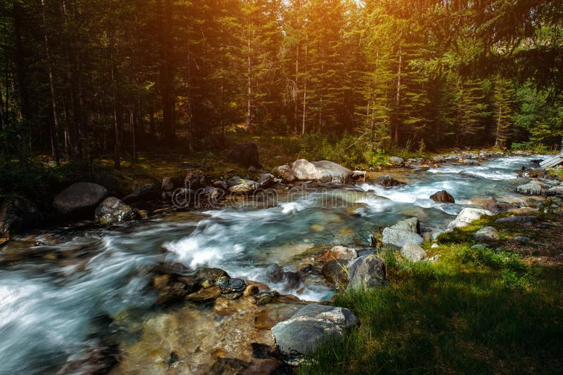 Summer landscape of mountain river among green trees. Sunlit river in the mountain forest. Picture of beautiful nature.  royalty free stock photos