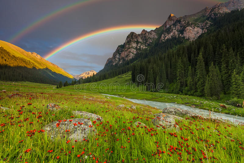 Summer landscape in mountains with Flowers, a rainbow royalty free stock photography