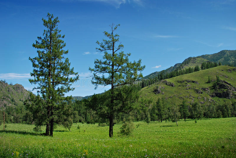 Summer landscape, mountains and meadow stock photography