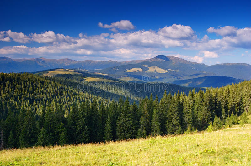 Summer landscape in mountains a sunny day royalty free stock image