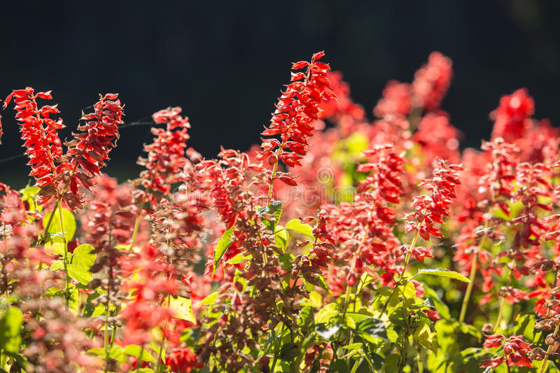 The summer landscape with red flowers. On a meadow stock images