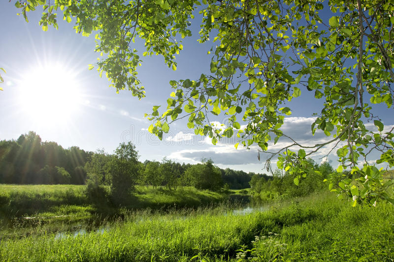 Summer landscape with river royalty free stock photography
