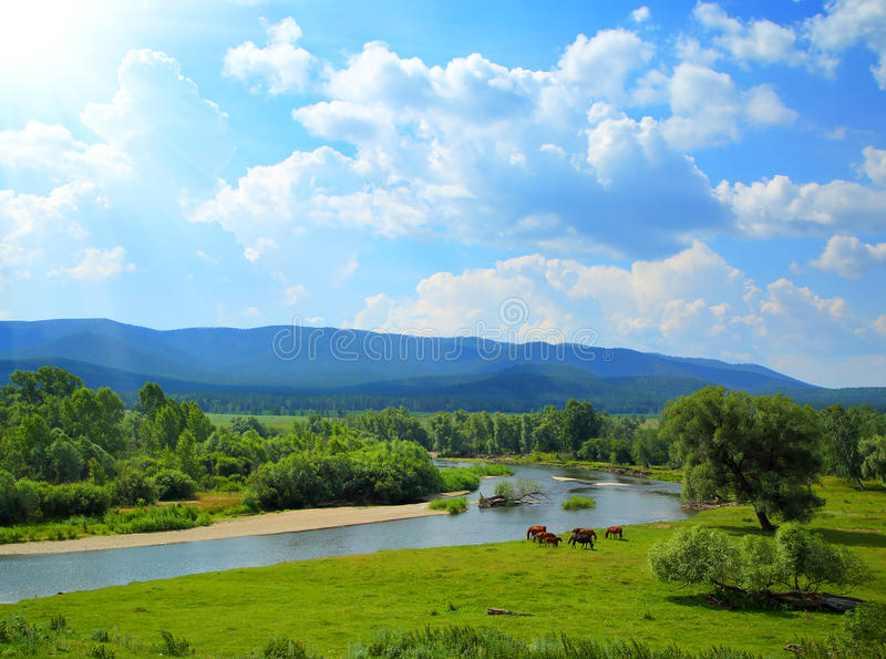 Summer landscape with river mountains and horses royalty free stock photography