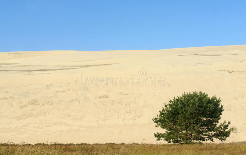 A summer landscape of a sand-dune with a tree royalty free stock photos