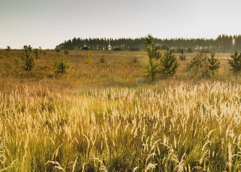 Summer landscape. This summer landscape shows the beauty of nature near Kiev royalty free stock image