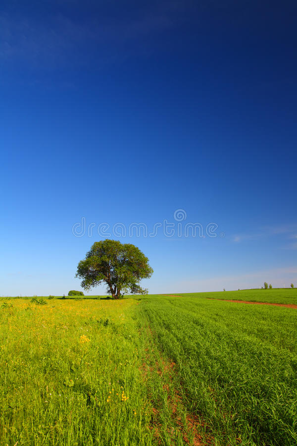 Download Summer Landscape With Single Tree Stock Image - Image of green, agriculture: 26739481