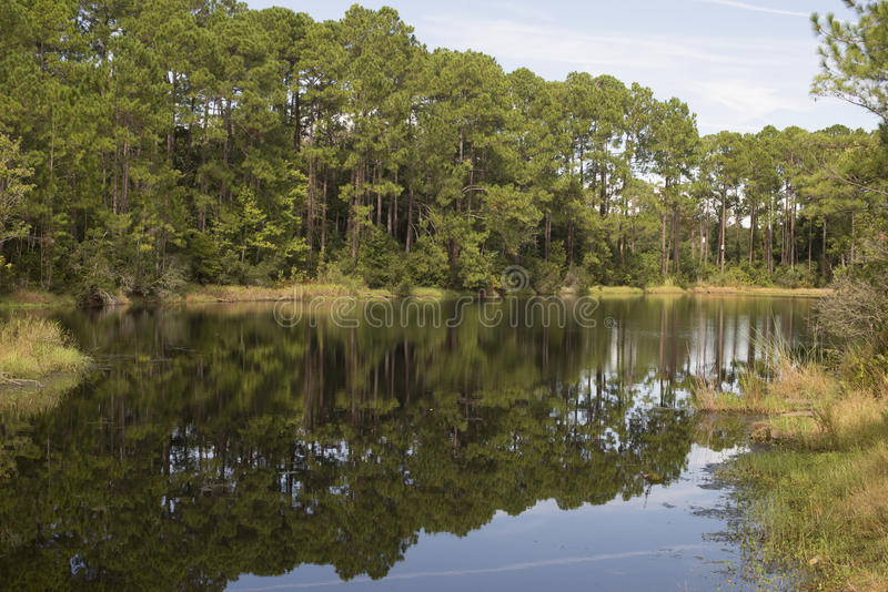 Summer landscape of steady river and bright trees stock photos