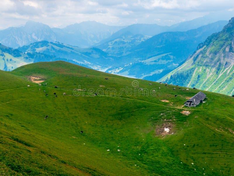 Summer landscape of Switzerland nature at Rochers-de-Naye. Summer landscape of Switzerland mountain nature at Rochers-de-Naye stock image