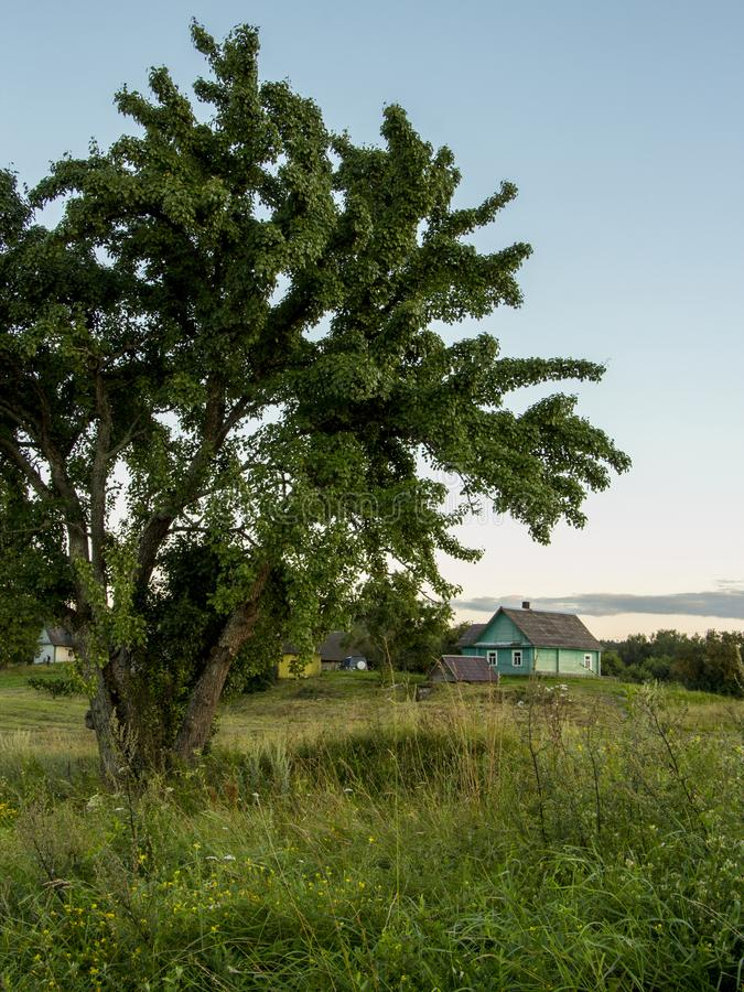 Summer landscape. Tree and green meadow.Country. stock photography