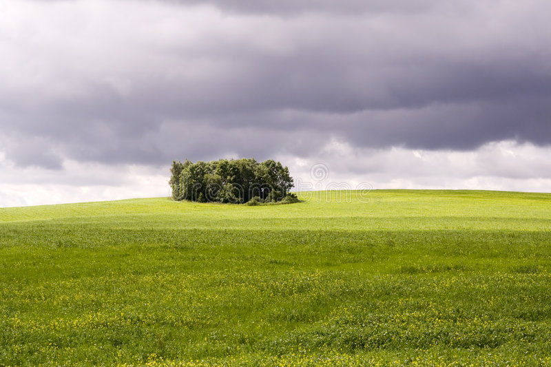 Summer landscape with trees stock images