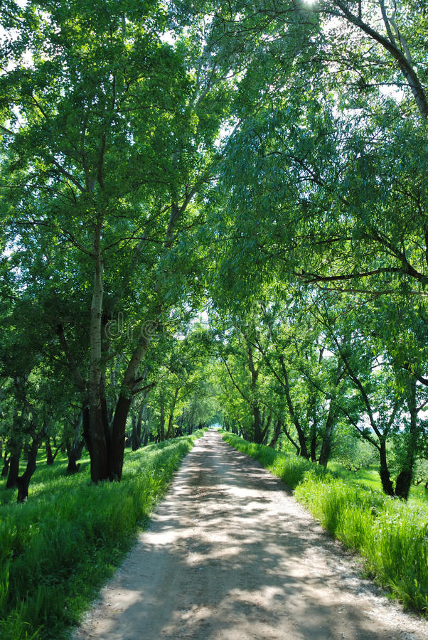 Free Summer Landscape With Wood Road Stock Photography - 10619262