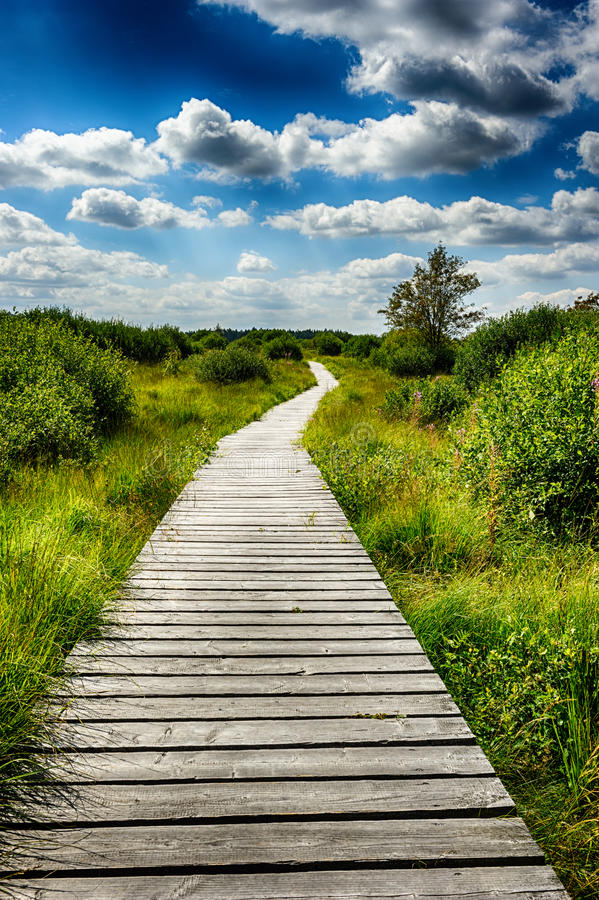 Summer landscape with wooden walkway royalty free stock images