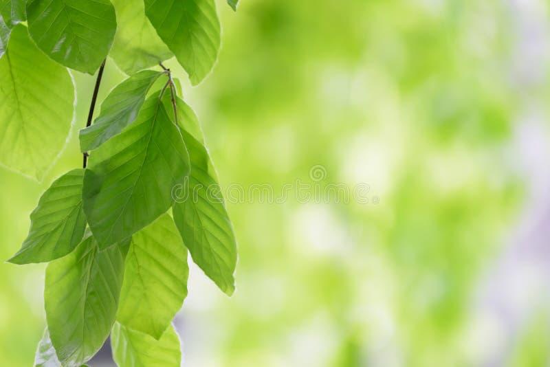 Download Summer Leaves stock photo. Image of environmental, closeup - 31170904