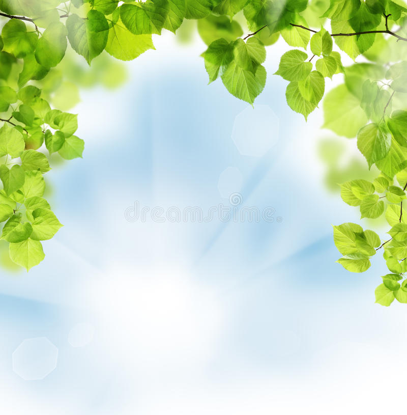 Free Summer Leaves On Greenery Background Stock Photography - 38562792