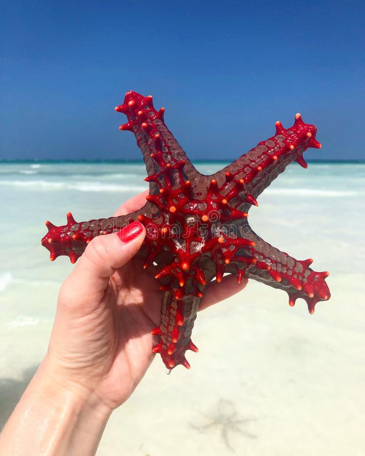 Summer lifestyle image. Girl holding red starfish in hands over shallow sea water. Ocean stock photography